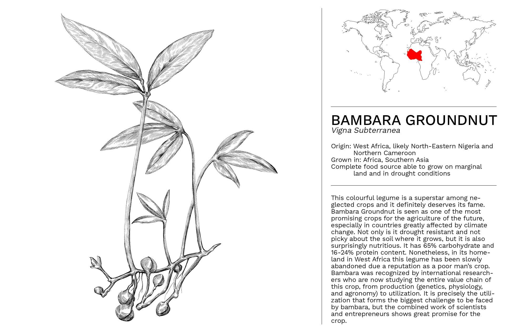 BAMBARA_GROUNDNUT_Slideshow