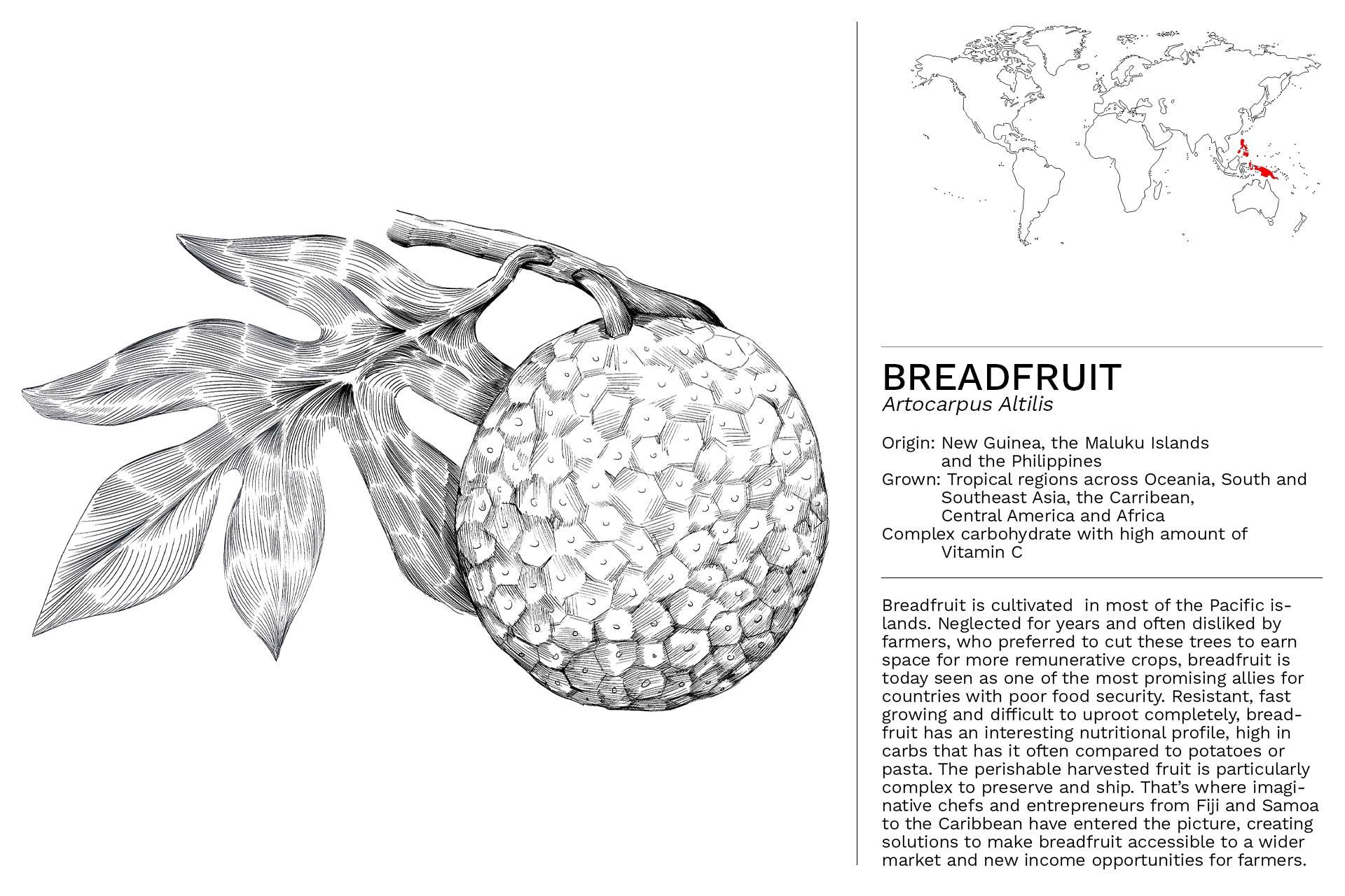 BREADFRUIT_Slideshow