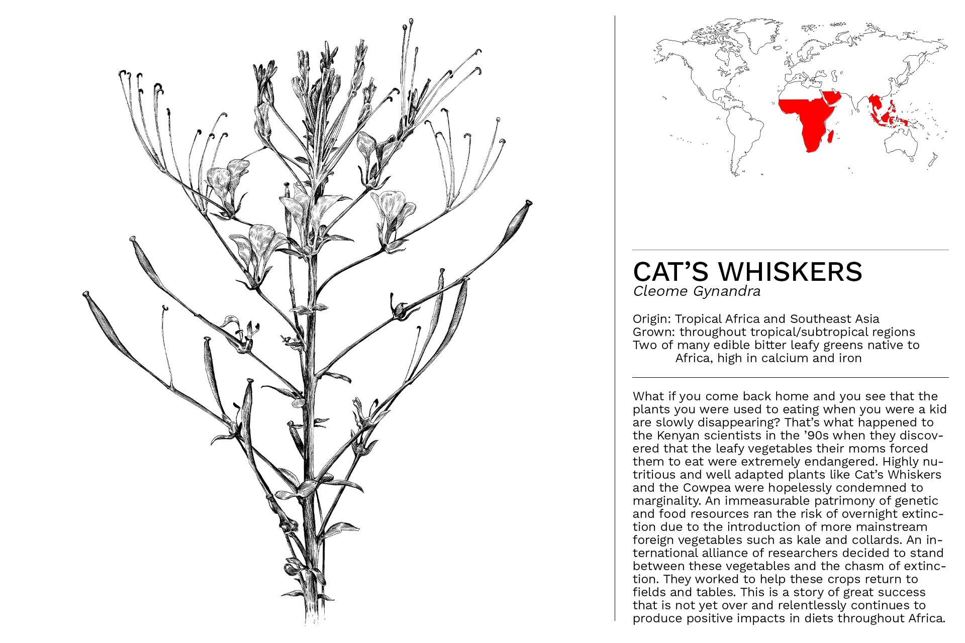 CATS_WHISKERS_Slideshow