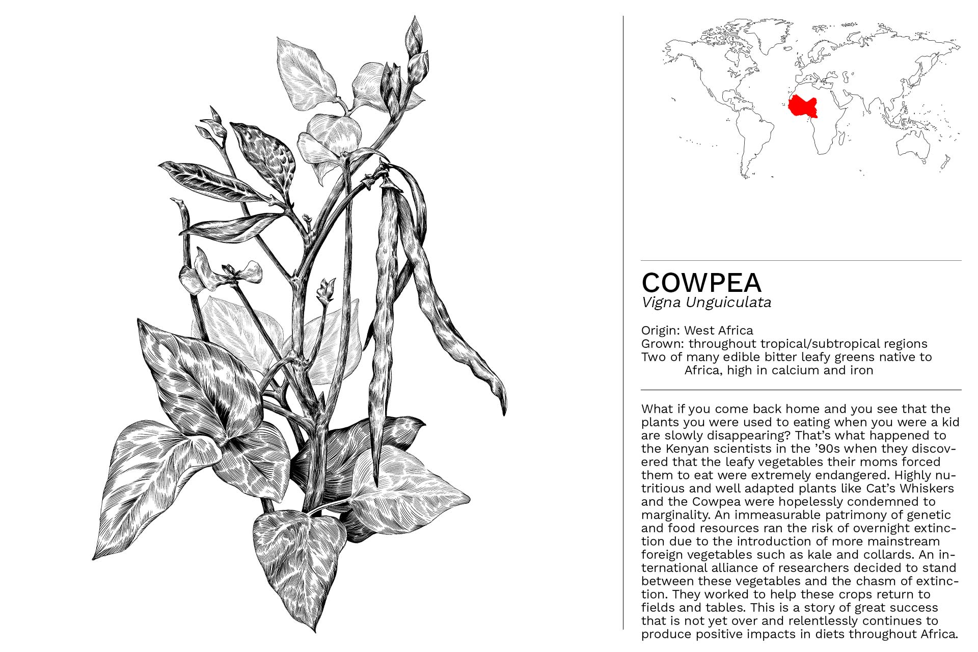 COWPEA_Slideshow