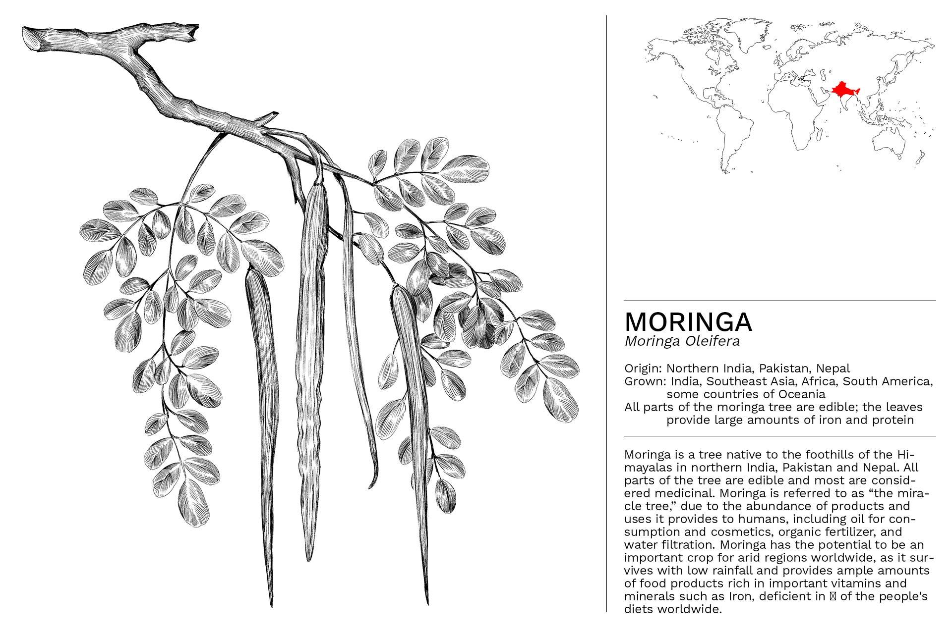 MORINGA_Slideshow