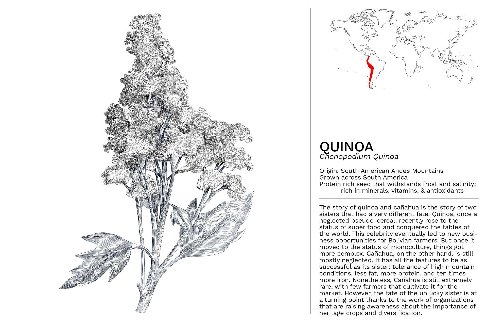 QUINOA_Slideshow