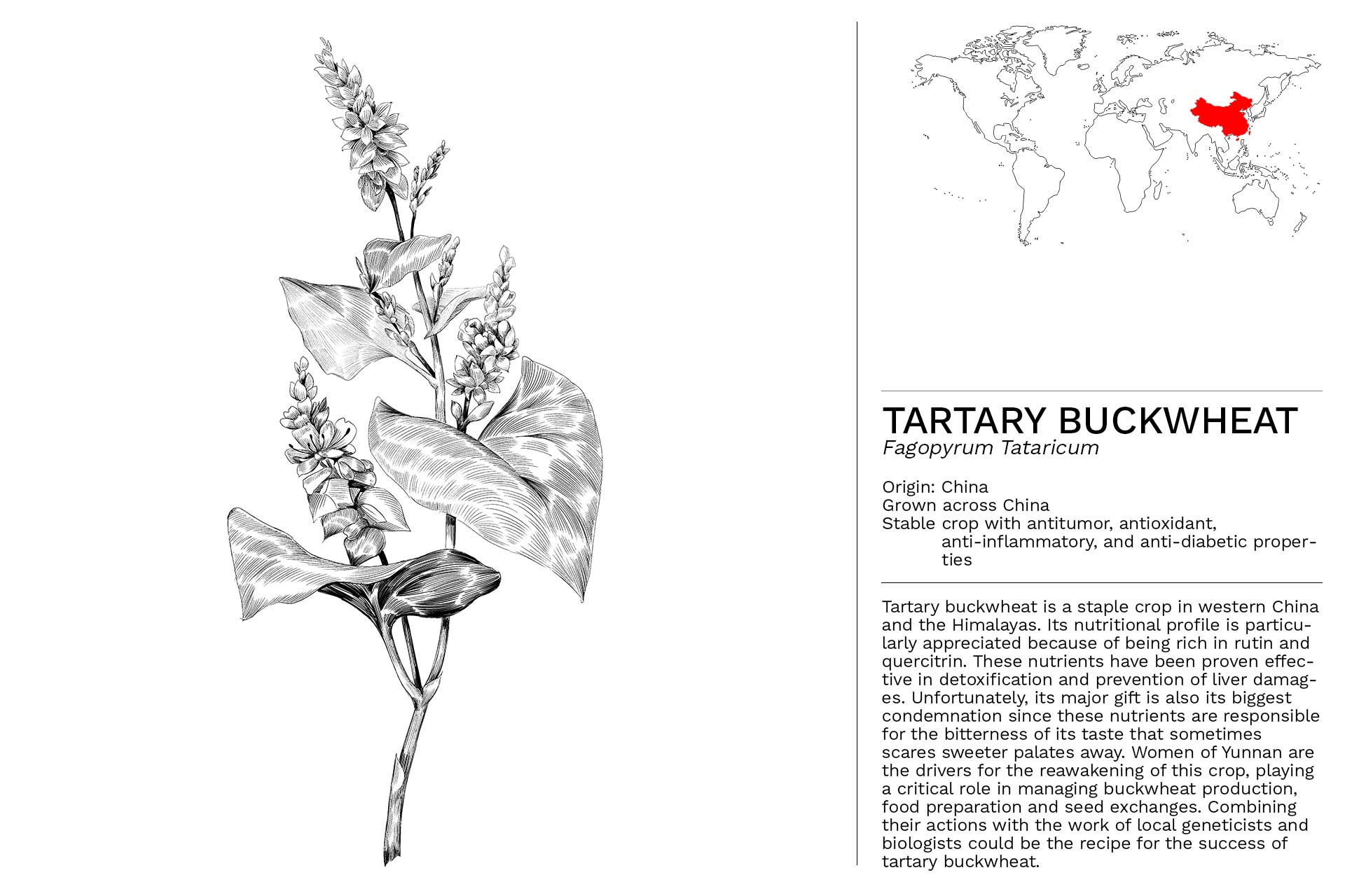 TARTARY_BUCKWHEAT_Slideshow