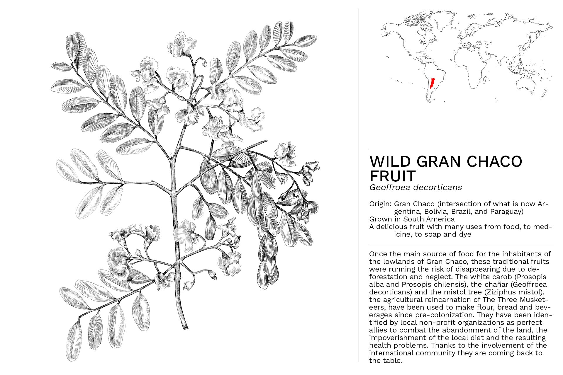 WILD_GRAN_CHACO_FRUIT_2_Slideshow