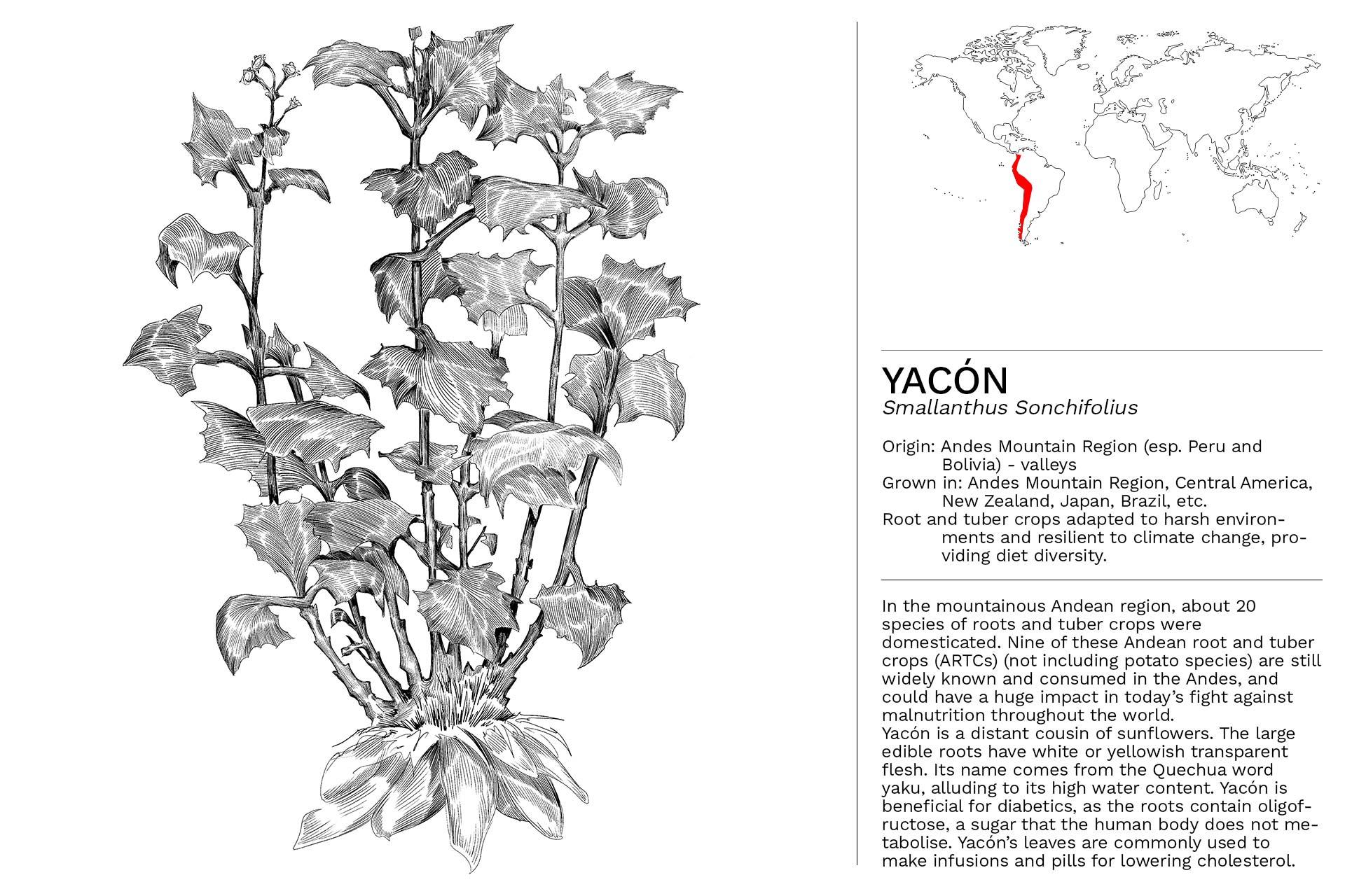 YACON_Slideshow