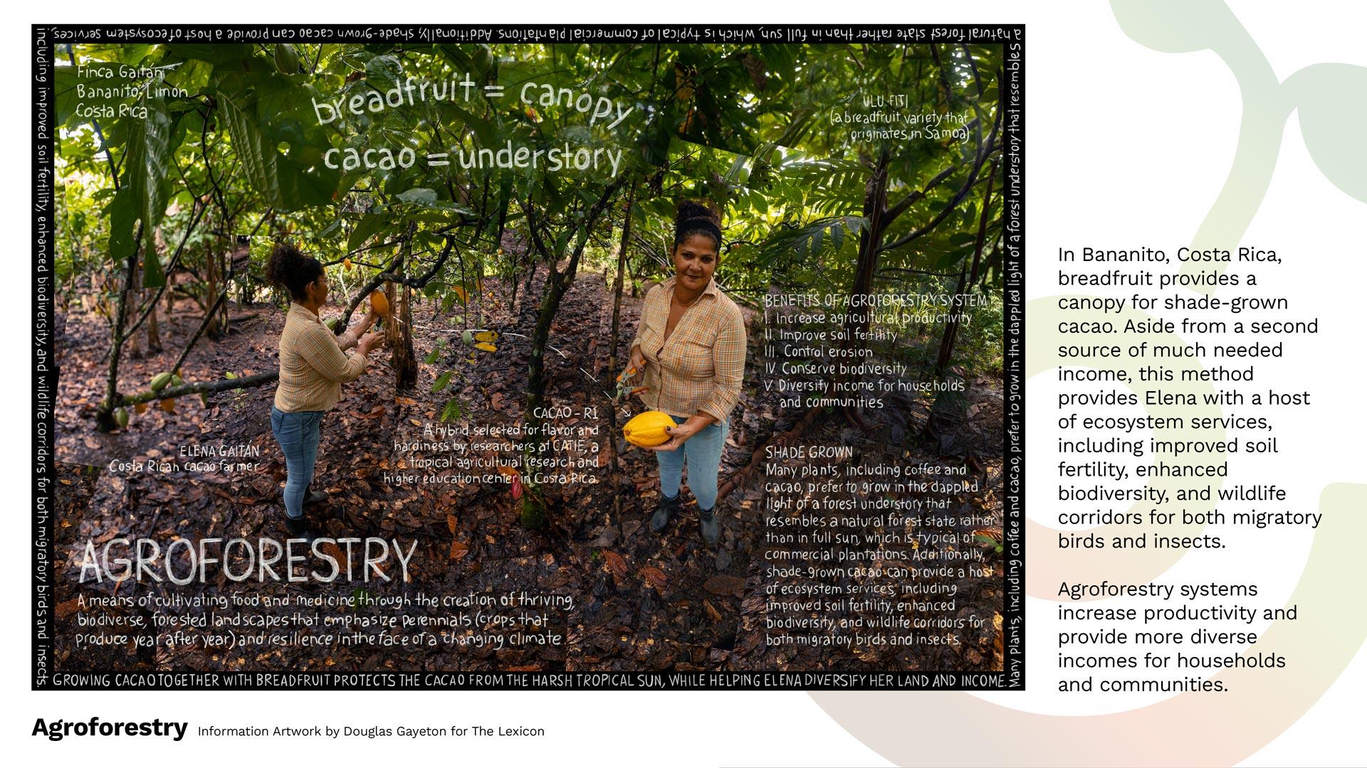 Agroforestry_Douglas-Gayeton_WEB