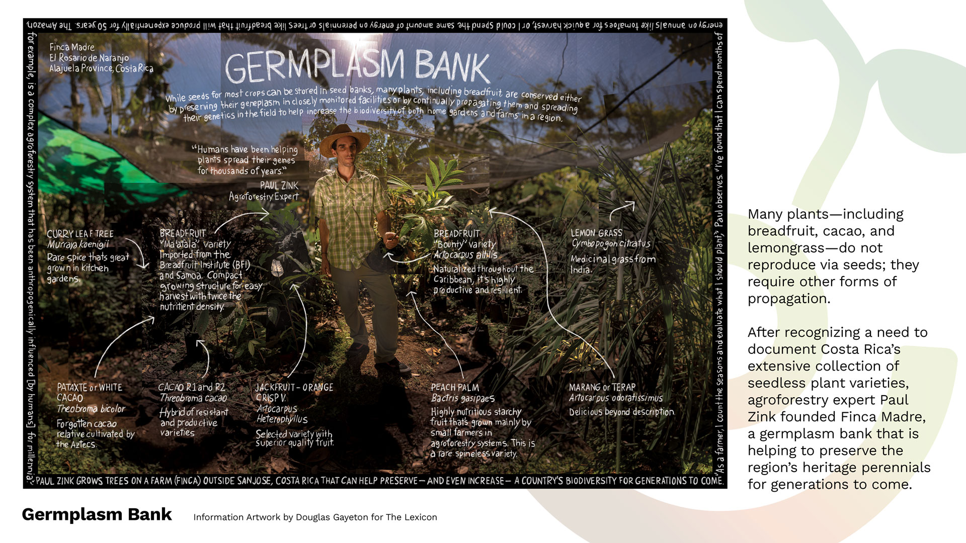 REAWAKENED8_8_GERMPLASM_BANK_LEXICON